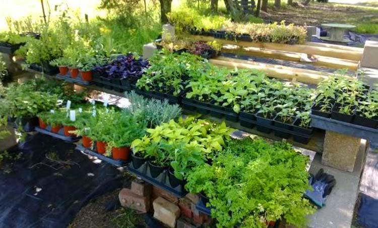 выращивание-зелени-как-бизнес
