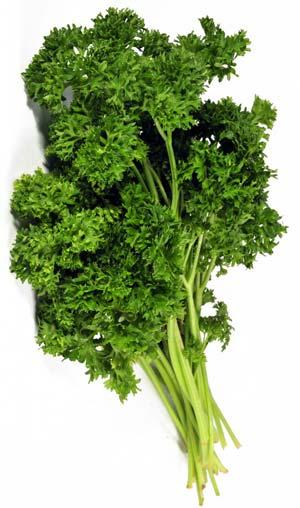 выращивание-зелени-на-продажу