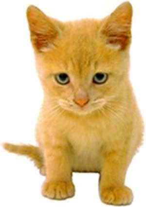 разведение-кошек-на-продажу