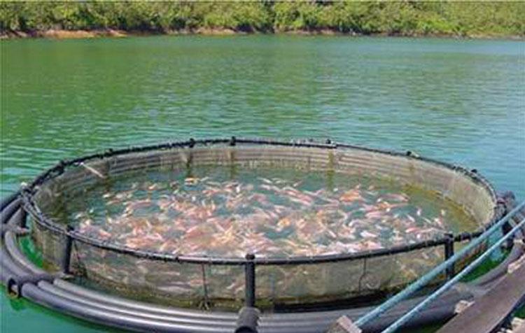 разведение-рыбы