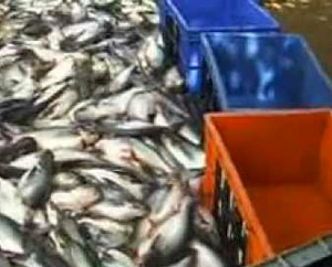 рыба-на-продажу