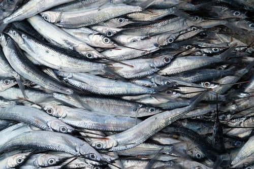 Как открыть рыбный магазин?