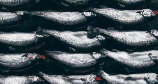 Плюсы рыбного маназина