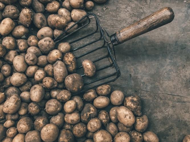 Выращивания картофеля как бизнес