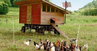 Мини-птицеферма